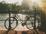 rower turystyczny w parku